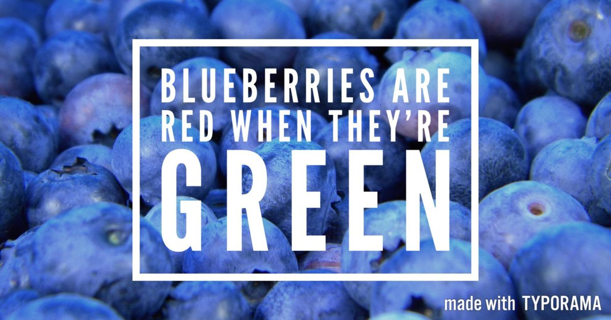 Blueberries are red when they are green