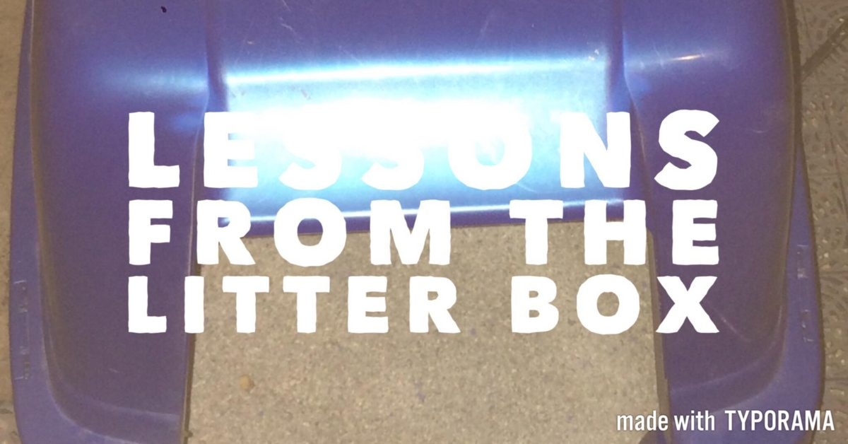 Lessons from the litter box